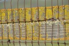 Recinto rustico con muschio variopinto Fotografia Stock Libera da Diritti