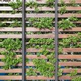 Recinto verde e di legno Immagine Stock Libera da Diritti