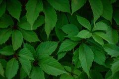 Recinto verde vivente sui precedenti Fotografia Stock Libera da Diritti