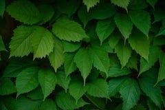 Recinto verde vivente sui precedenti Immagine Stock Libera da Diritti