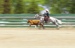 Recinto Work Horse e mucca Fotografia Stock