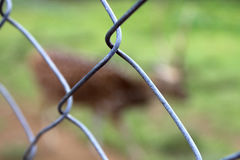 Recinzione del cavo Fotografia Stock Libera da Diritti