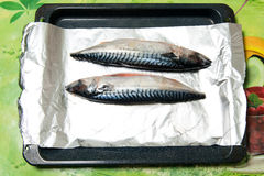 Recipe bonito baked in foil on a baking sheet Royalty Free Stock Image