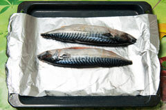 Recipe bonito baked in foil on a baking sheet Stock Photography
