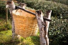 Recipiente di bambù in giardino Fotografia Stock Libera da Diritti