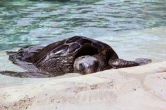 Reclinación de la tortuga Fotografía de archivo