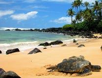 Reclinación de la tortuga de mar Foto de archivo libre de regalías