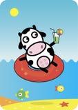 Reclinación de la vaca. Imagen de archivo libre de regalías