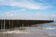 Reclinación de las gaviotas Foto de archivo