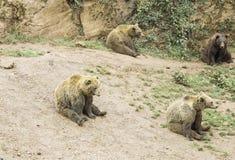 Reclinación de los osos imagen de archivo