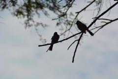 Reclinación de los pájaros Imagen de archivo