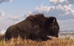 Reclinación del búfalo imagen de archivo