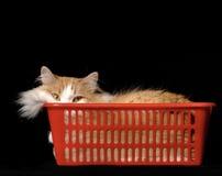 Reclinación del gato   Fotos de archivo libres de regalías