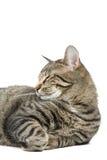 Reclinación del gato Imagen de archivo libre de regalías