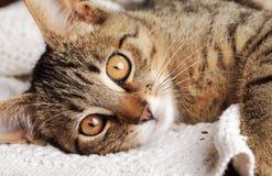 Reclinación del gato Foto de archivo libre de regalías
