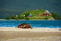 Reclinación del oso de Brown Imágenes de archivo libres de regalías