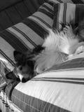 Reclinación del perro Imagenes de archivo