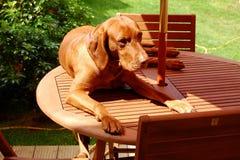 Reclinación del perro Fotos de archivo