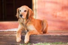Reclinación del perro imágenes de archivo libres de regalías