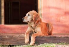 Reclinación del perro foto de archivo