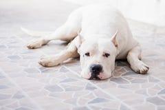 Reclinación del perro foto de archivo libre de regalías