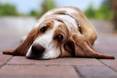 Reclinación del perro Imagen de archivo libre de regalías