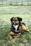 Reclinación del perro al aire libre Fotos de archivo libres de regalías