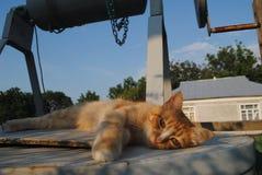 Reclinación roja del gato Foto de archivo