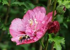 Reclinación sobre la flor Foto de archivo libre de regalías