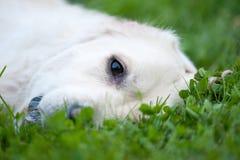 Reclinación feliz del perro Fotos de archivo libres de regalías