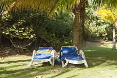 Reclining chairs on grass garden with palm trees in Cuba Royalty Free Stock Photography