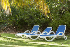 Reclining chairs on grass garden with palm trees in Cuba Royalty Free Stock Image