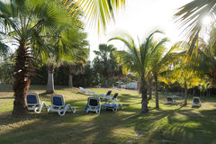 Reclining chairs on grass garden with palm trees in Cuba Royalty Free Stock Photos