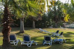 Reclining chairs on grass garden with palm trees in Cuba Royalty Free Stock Images