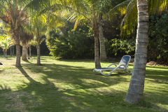 Reclining chairs on grass garden with palm trees in Cuba Stock Image