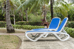 Reclining chairs on grass garden with palm trees in Cuba Stock Photos