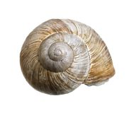 Reclusive grapevine snail Stock Photo