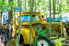 Recogida amarilla vieja en árboles Fotos de archivo libres de regalías