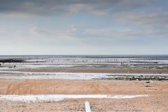 Recogida de cáscaras en el mar Imágenes de archivo libres de regalías