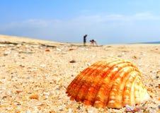 Recogida de cáscaras en la playa Fotos de archivo