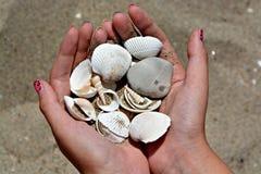 Recogida de conchas marinas Imagenes de archivo