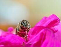 Recogida de la abeja Fotografía de archivo