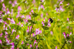Recogida de la abeja Foto de archivo
