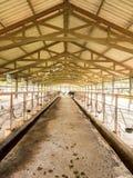 Recogida de la leche de vaca diaria en granja de la industria de la leche, Tailandia fotografía de archivo