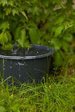 Recogida del agua de lluvia en un cubo que desborda en la hierba Fotografía de archivo
