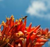 Recogida del néctar Fotografía de archivo