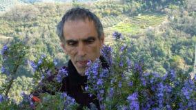 Recogida del romero en las montañas almacen de metraje de vídeo