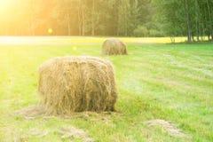 Recogiendo el heno en un campo de oro, las balas redondas de heno, agricultura, granja, ganado alimentan, paisaje rural fotografía de archivo libre de regalías