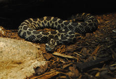 Recoiled Snake Stock Photo