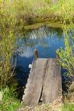 Recoin confortable à un étang de source Photographie stock libre de droits